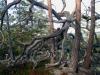 bjuron-petberget