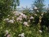 palholmen-blomster